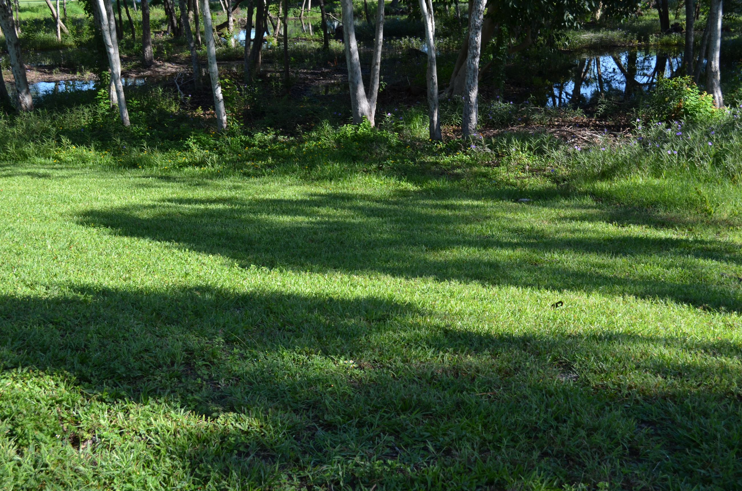Green Lawn Area Next to Creek
