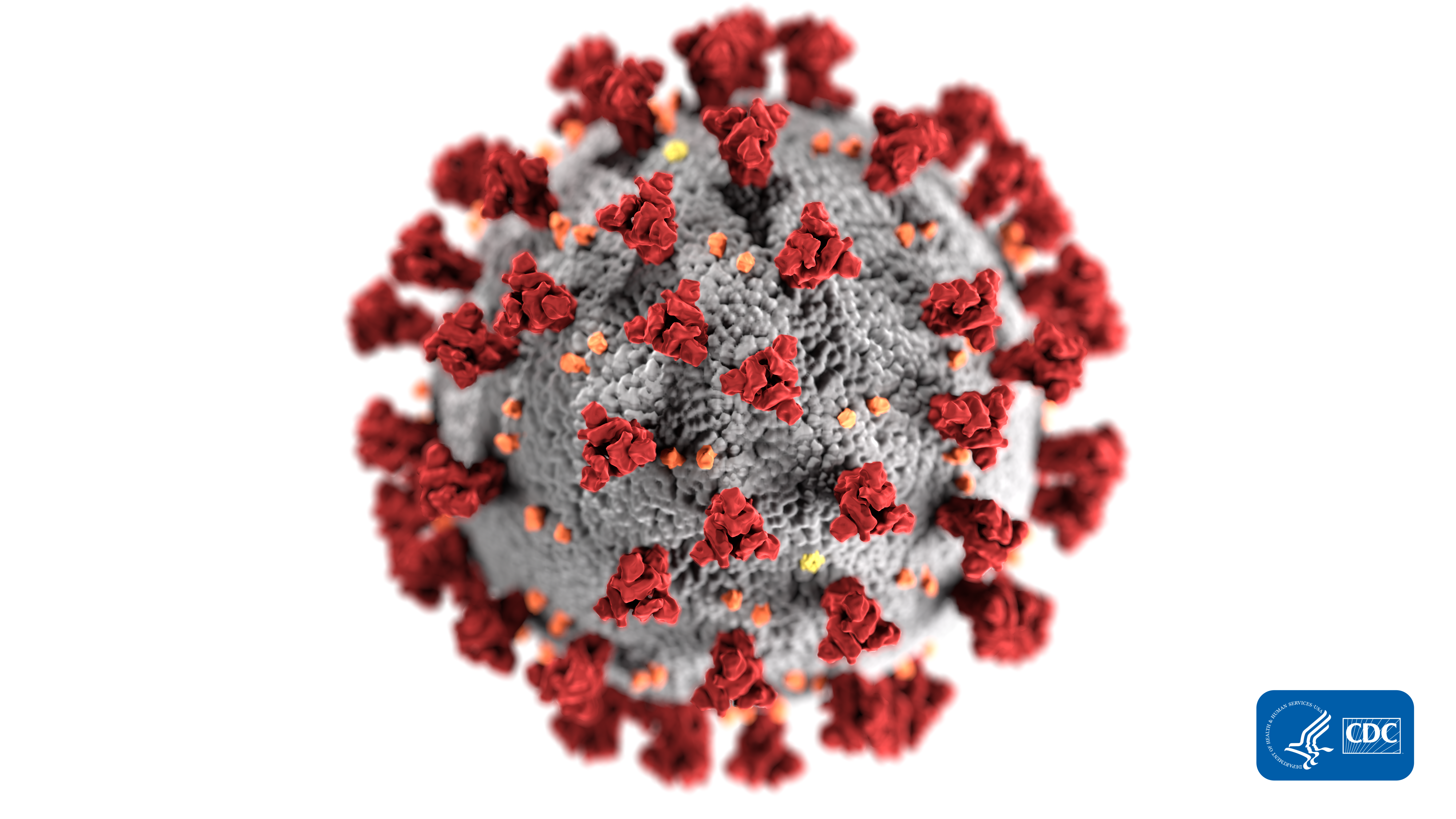 High resolution microscopic image of a coronavirus particle