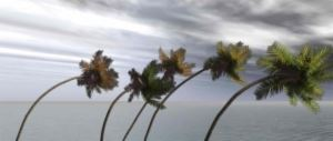 Swaying Palm Trees in Strong Wind