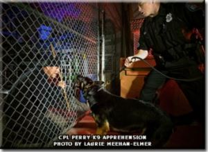 Working Dog Apprehending a Criminal