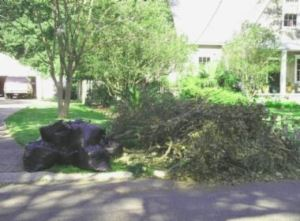Yard with Bagged Debris and Tree Limbs